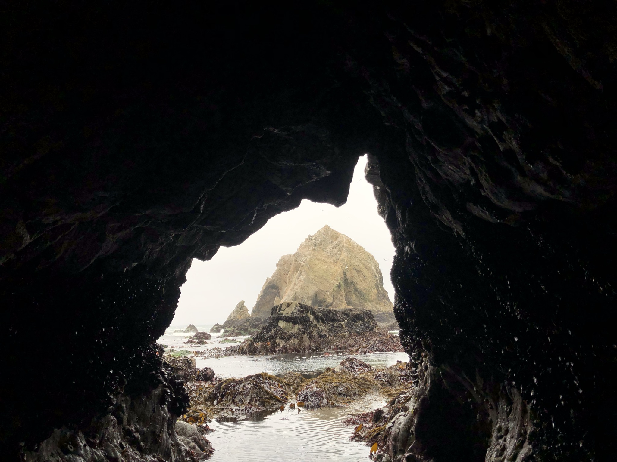 View from inside a cave looking out to a large rock called Elephant Rock. The cave walls are black and there is a stream of water leading out to the rock and the ocean.