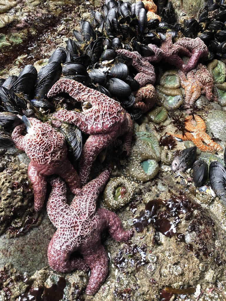 View of the ground with black mussels, orange and purple sea stars, and green sea anemones.