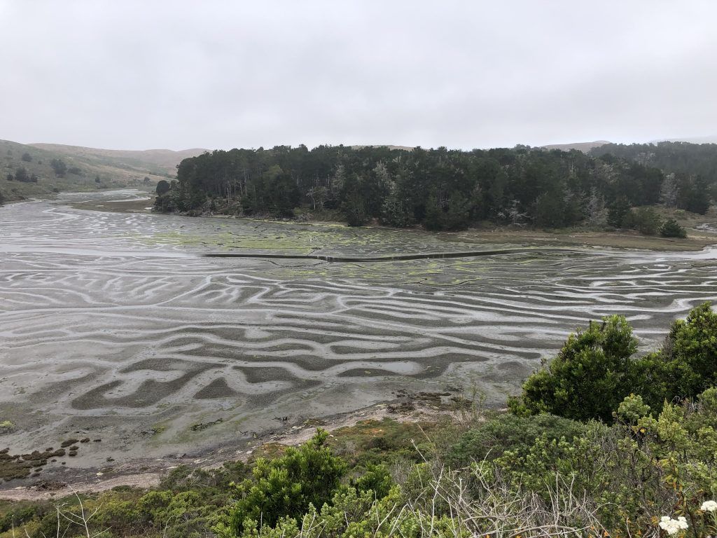 View of an estuary in low tide.